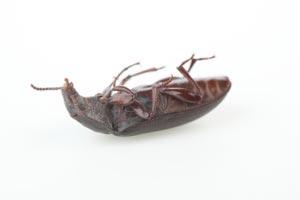 C mo eliminar las hormigas de la casa - Plaga hormigas en casa ...
