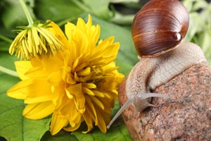 Cómo atrapar caracoles y otros insectos del jardín
