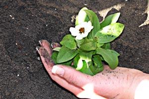 Como saber cuando se debe trasplantar una planta