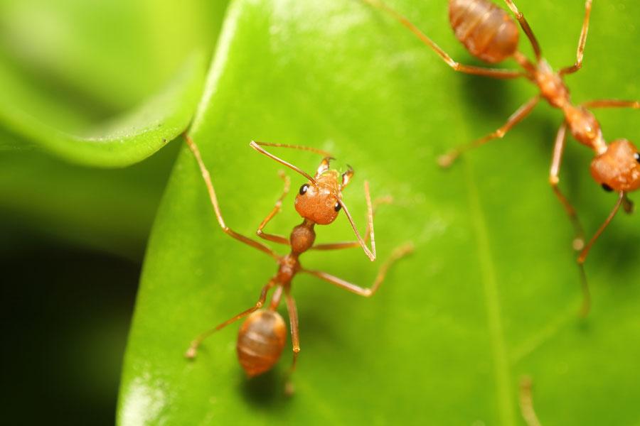 C mo eliminar las hormigas del jard n - Como eliminar hormigas ...
