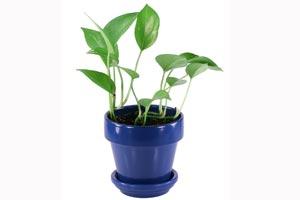 Como limpiar las plantas de interior