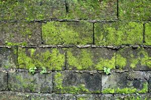 Trucos para eliminar el verdín de las paredes. Qué es el verdín y cómo quitarlo? Métodos para limpiar una pared con verdín