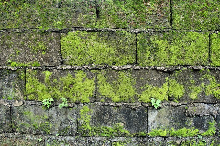 Trucos para eliminar el verdín de las paredes. Qué es el verdín y cómo quitarlo? Métodos para limpiar una pared con verdín.