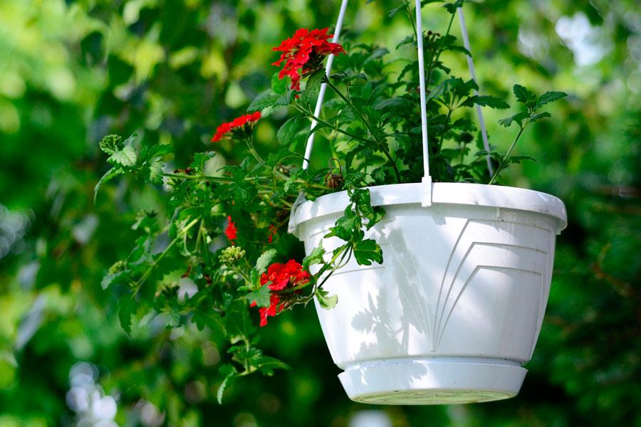C mo cuidar las plantas colgantes - Plantas colgantes de exterior ...