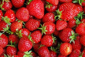Cómo conservar las fresas en buenas condiciones