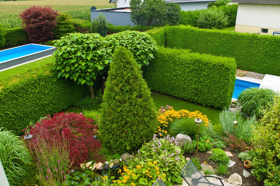 C mo utilizar arbustos para decorar - Arbustos para jardin ...