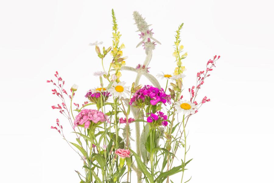 Cómo clasificar las plantas según sus tallos