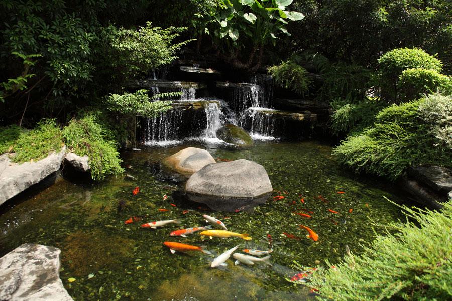 Consejos para tener un estanque de peces