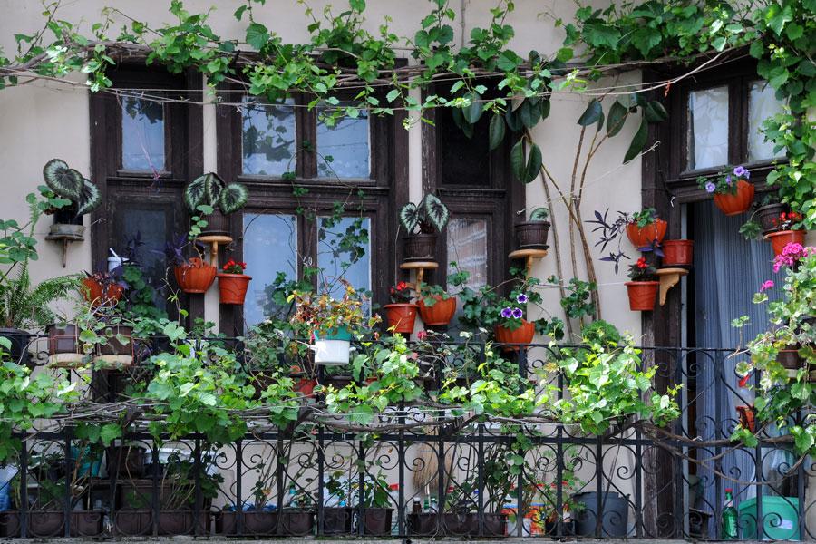 Como cuidar las plantas en el balcón
