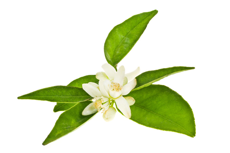 Cómo utilizar las flores azahar