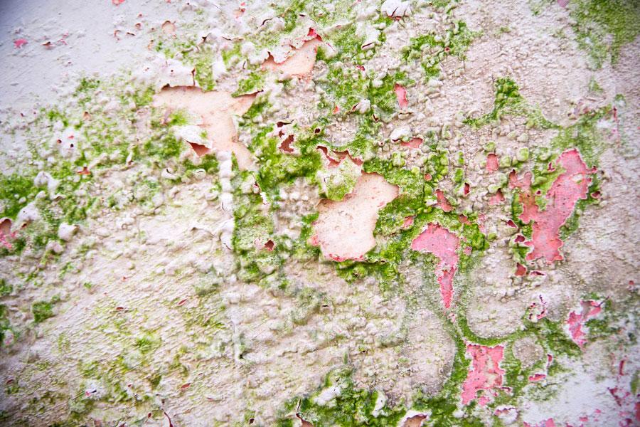 C mo eliminar los hongos en las paredes - Como quitar hongos de la pared ...