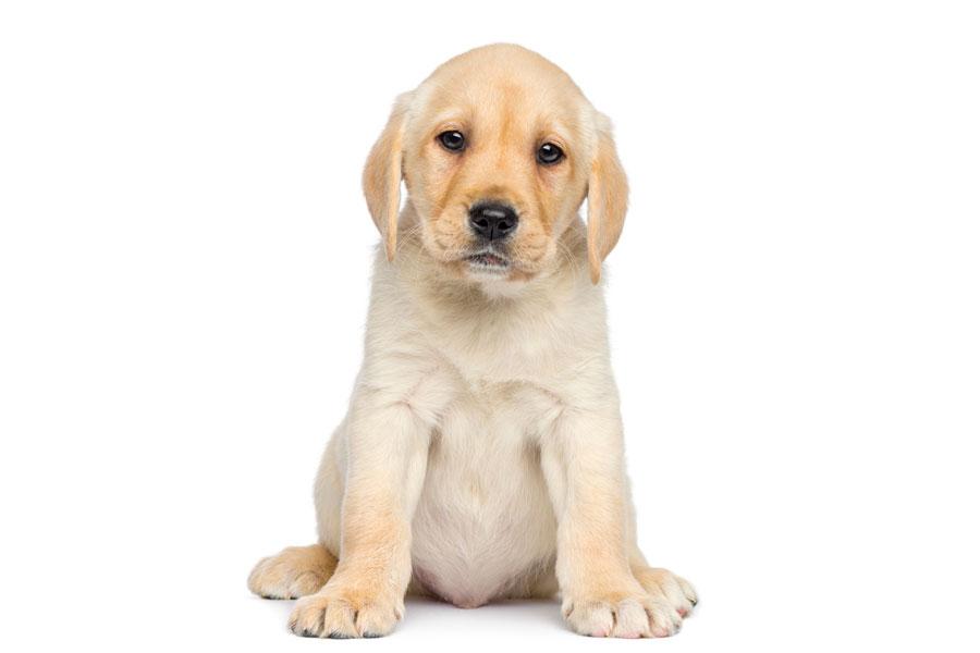Cómo cuidar a un cachorro