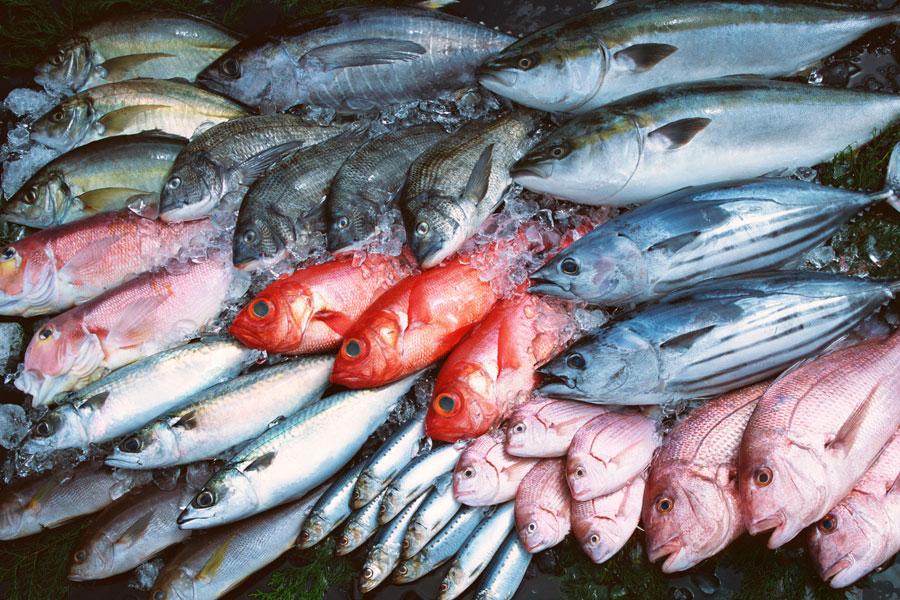 c mo se clasifican los pescados