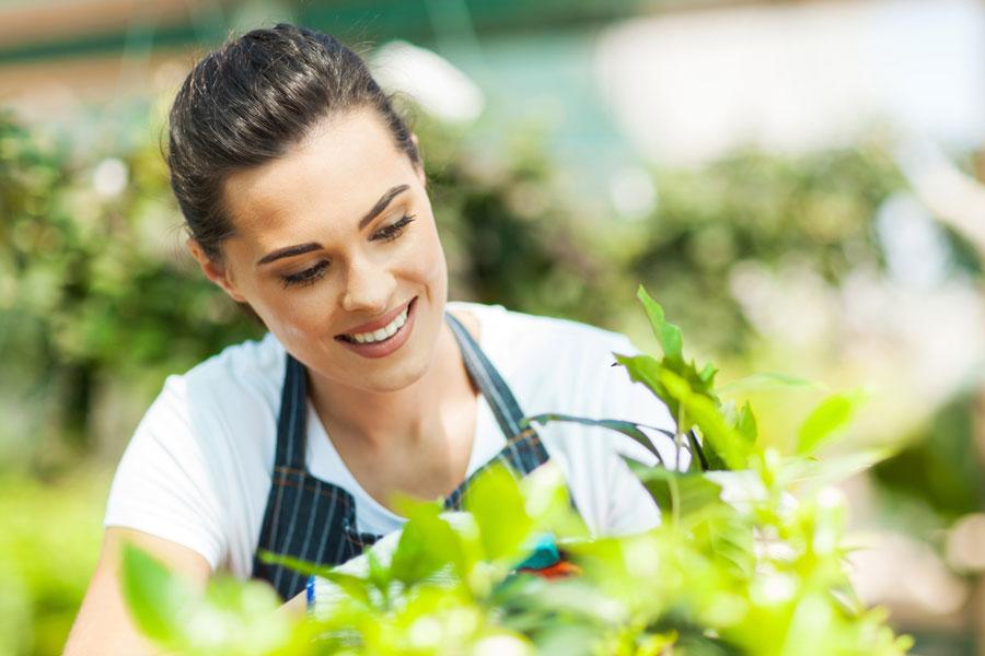 Algunos consejos para cuidar las plantas. Descubre tips interesantes para el cuidado de las plantas marchitas o con mal asepcto