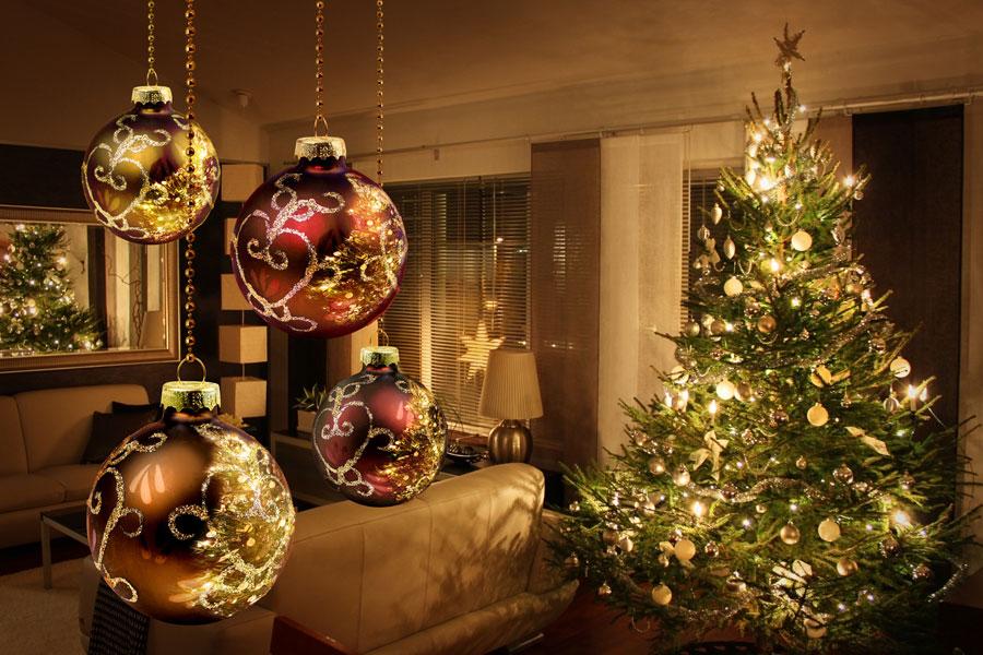 Opciones a la hora de elegir un pino de Navidad. como elegir un pinito navideño. Opciones en pinos para esta navidad