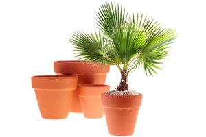 Consejos para abonar y regar las palmeras de interior. Tips para regar y abonar palmeras que se encuentran en el interior del hogar