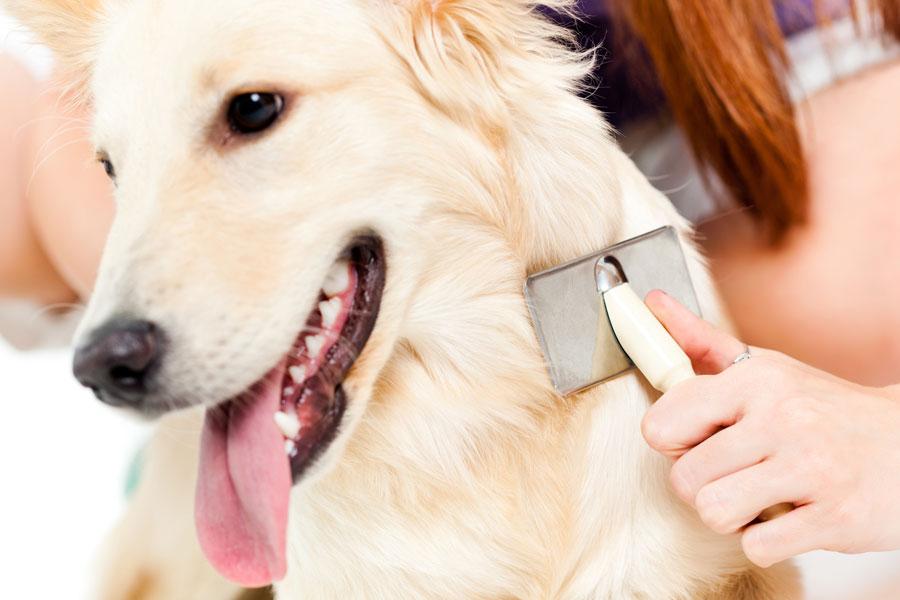 Consejos para cuidar el pelaje del perro. tips para cuidar el pelo del perro. cómo cuidar el pelaje de los perros