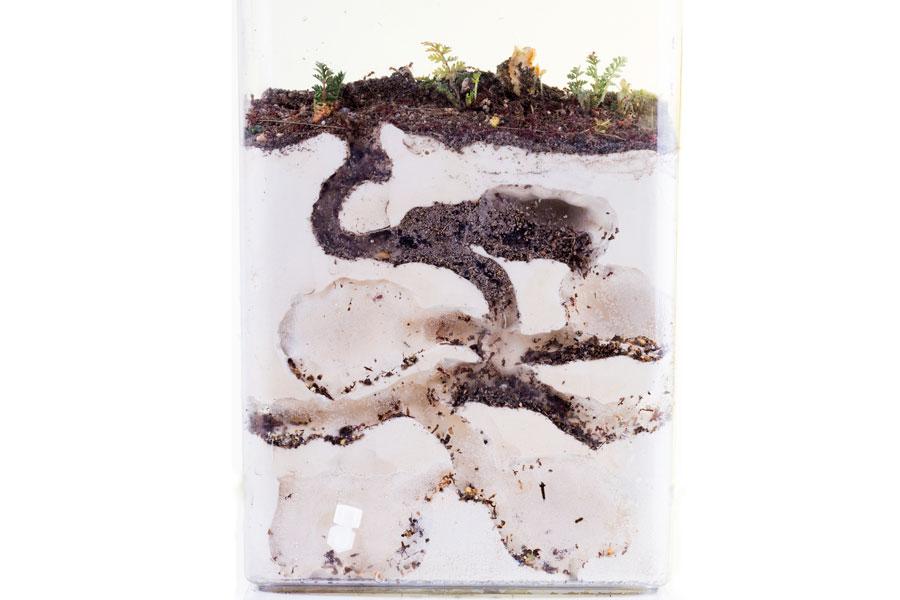 Cómo crear una colonia de hormigas en casa. Consejos para tener una colonia de hormigas como mascotas
