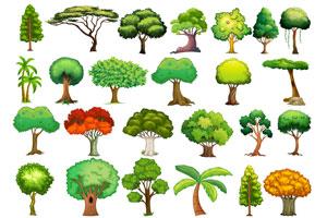 Cómo elegir árboles segun sus colores. tips para elegir los árboles según los colores que predominan en el jardín.
