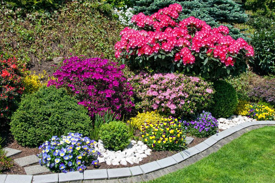 con muchas flores durante todo el año Cómo elegir plantas para