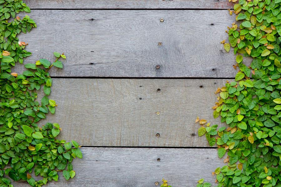 Consejos de cuidado para plantas trepadoras y enredaderas Cómo