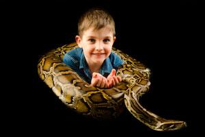 Cómo tener a una serpiente de mascota. Consejos par
