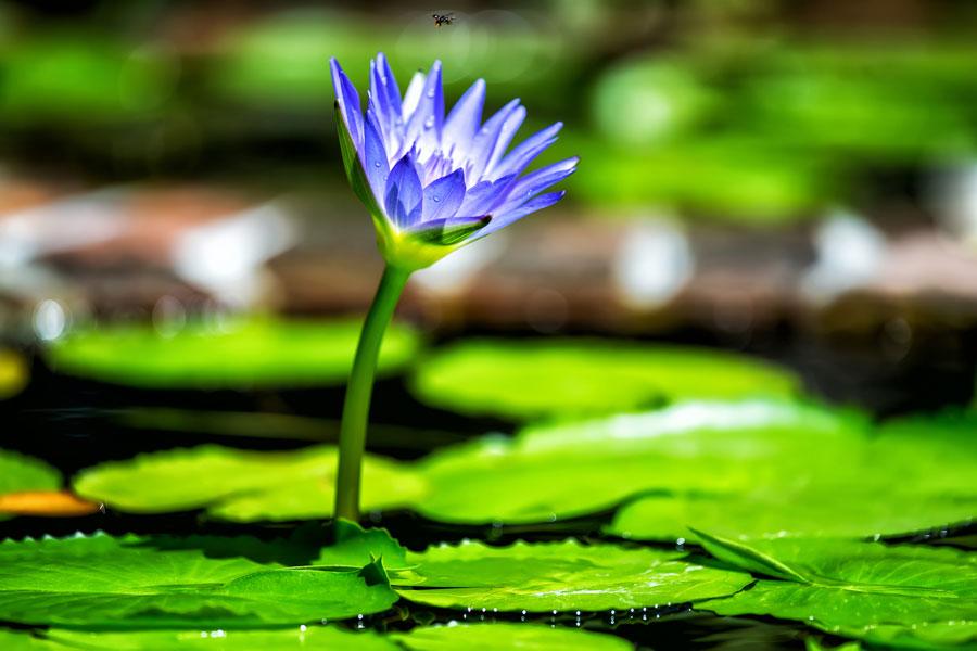 plantas acuáticas Aprende cómo cuidar los 4 tipos de plantas