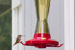 Un comedero para los colibríes. Como crear un comedero casero para disfrutr la compañía de colibríes en nuestro jardín