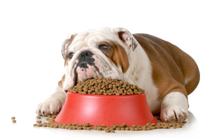 Qué hacer cuando tu Perro No Quiere Comer