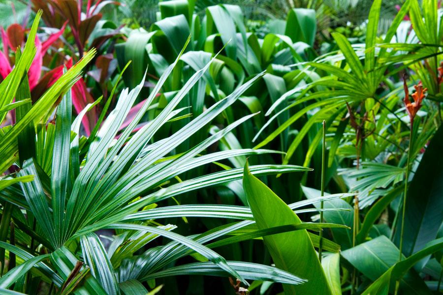 C mo elegir plantas para un jard n de estilo tropical - Plantas de jardin fotos ...