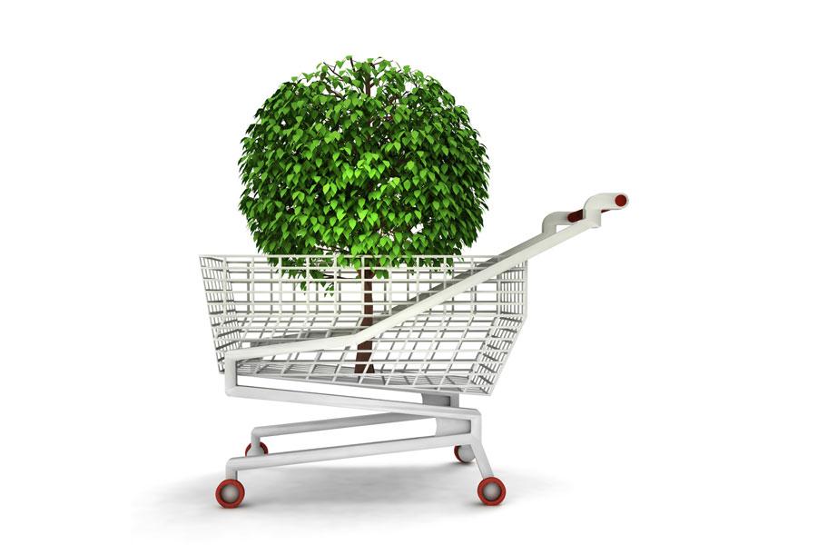 Cómo comprar árboles