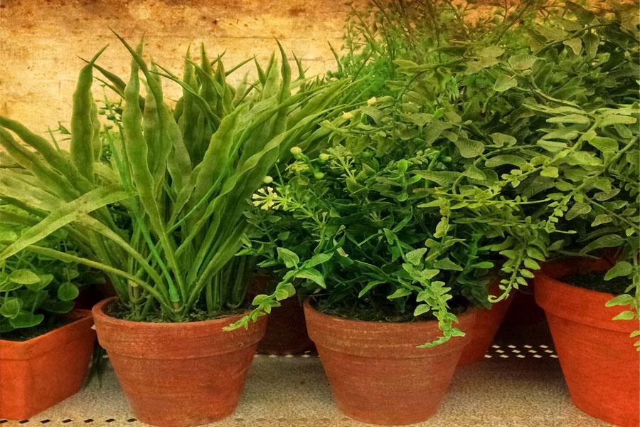 C mo proteger del calor a las plantas de interior - Plantas del interior ...
