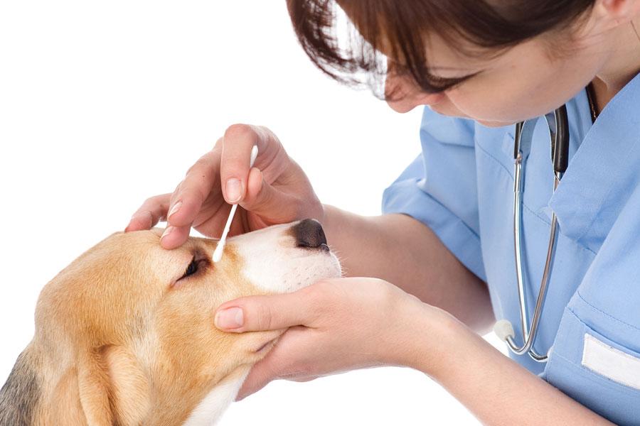 Cómo limpiar los ojos de las mascotas