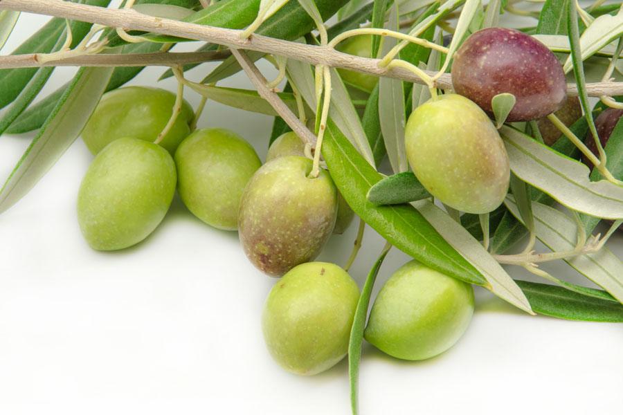 Métodos para conservar las aceitunas recién cosechadas. cómo conservar aceitunas. Procedimiento para curar las aceitunas y conservar.