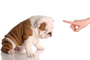 Cómo entrenar al perro para que esté dentro de la casa