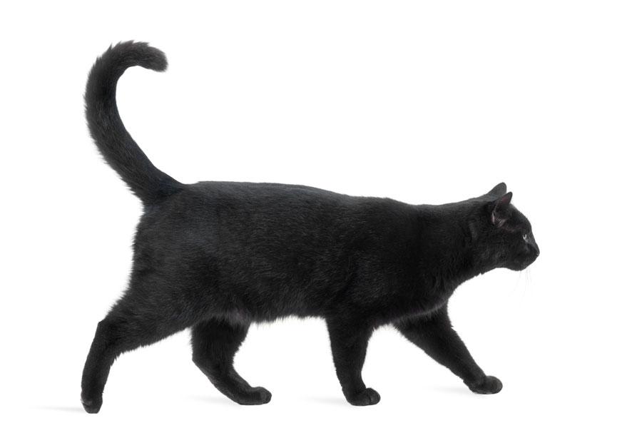 Cómo reconocer las supersticiones sobre animales