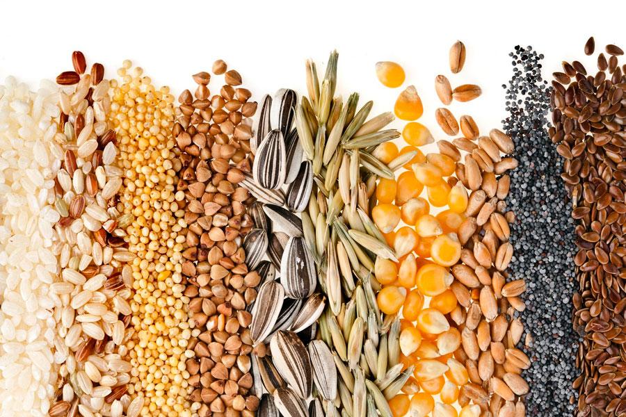 Consejos para crear cuadros con semillas. Como hacer cuadros usando granos y semillas comestibles.
