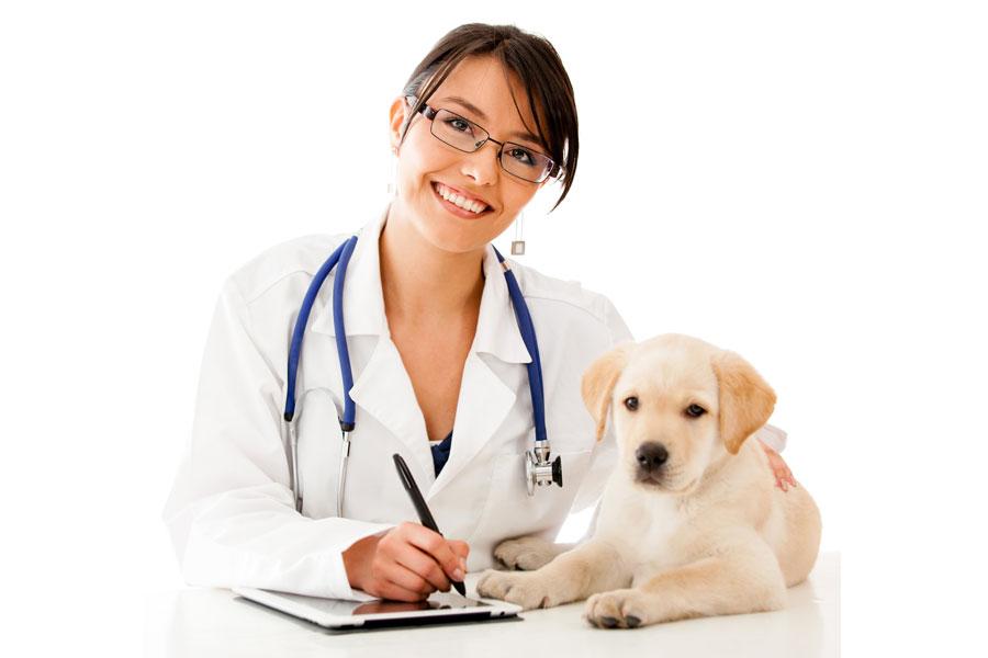 Cómo elegir a un nuevo veterinario