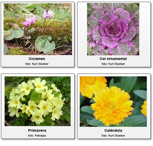 C mo tener flores en el jard n durante el invierno - Plantas de jardin nombres ...
