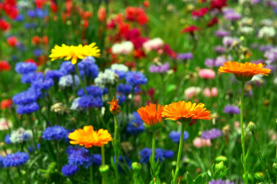 C mo tener flores en el jard n durante el invierno - Plantas de invierno para exterior ...