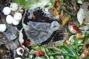 Uso de los restos de comida para abonar las plantas de maceta o de tierra. Consejos para abonar nuestras plantas con restos de comida