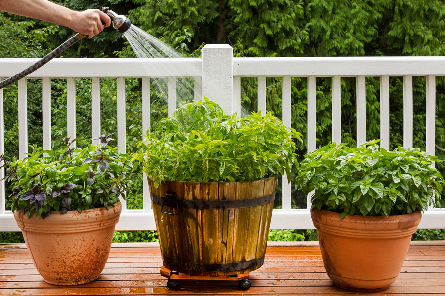 Cómo mantener hidratadas las plantas durante varios días