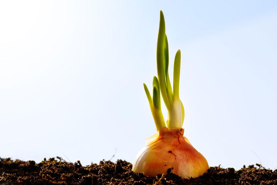 Cómo Plantar Hortalizas según los Meses del Año