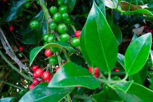 Cómo reconocer ciertas enfermedades de las plantas