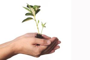 Cómo trasplantar plantas de jardín