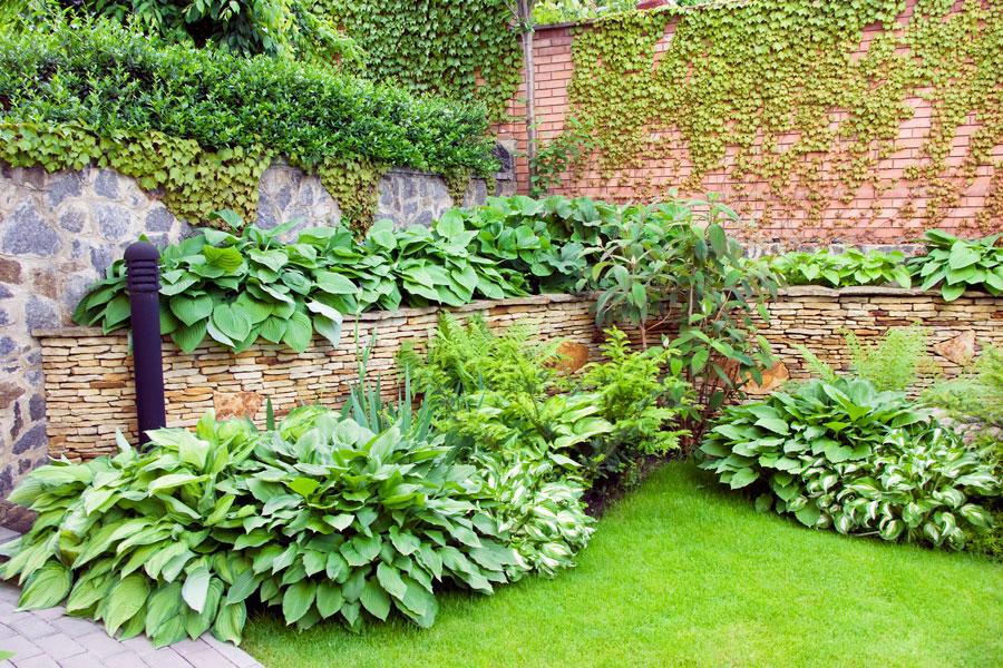 C mo hacer un jard n verde for Jardin verde
