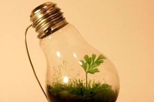 Cómo hacer un Jardín en miniatura dentro de una Bombilla de Luz