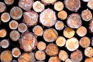 Cómo revestir una pared con rodajas de madera
