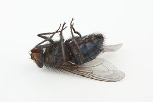 Cómo Combatir Moscas y Mosquitos en Casa