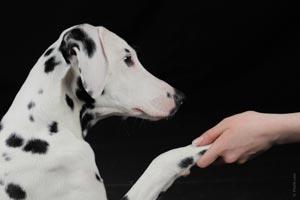 Cómo mejorar el comportamiento de un perro